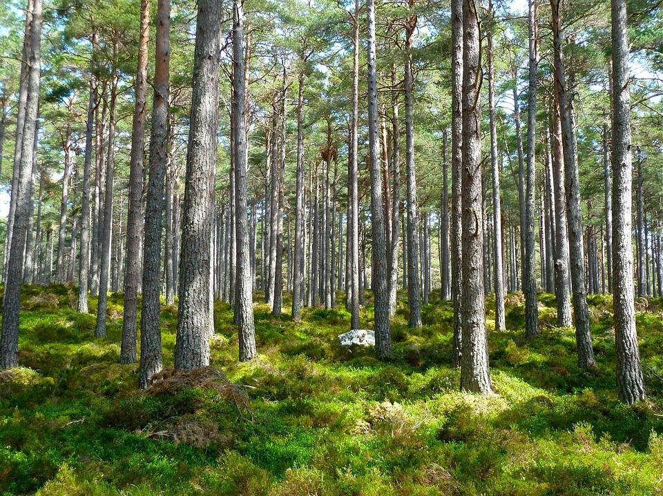 Kokybiškesnio miško ateitimi reikia pradėti rūpintis kuo anksčiau.